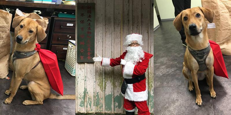 陪心寵糧 聖誕老公公贈送450公斤的健康飼料  給毛孩們加菜
